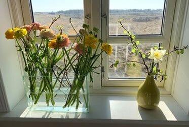 Nu ved jeg hvad påskeblomsten vil i mit vindue